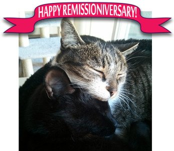 Happy Remissioniversary! Bella's been insulin-free for two years now, and we're celebrating!