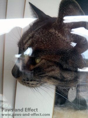 A brown tabby cat sits in a window