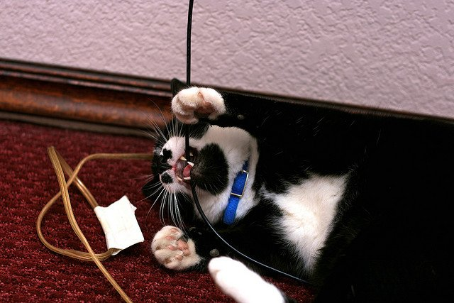 Stop Cat Eating Electrical Wires