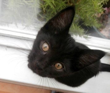 A black kitten sitting on a window sill stares up at the camera