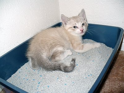 A kitten playing in a litter box