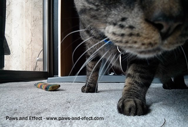 A cat sniffs at a camera lens as if in search of food