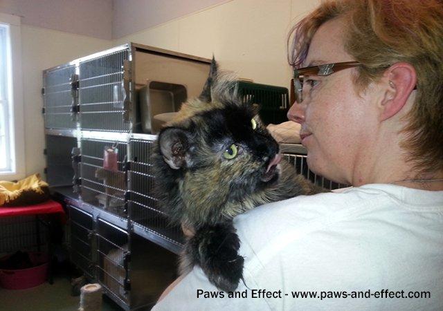 An animal shelter volunteer holds a long-haired tortoiseshell cat