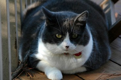 A very fat cat sits in a window sill