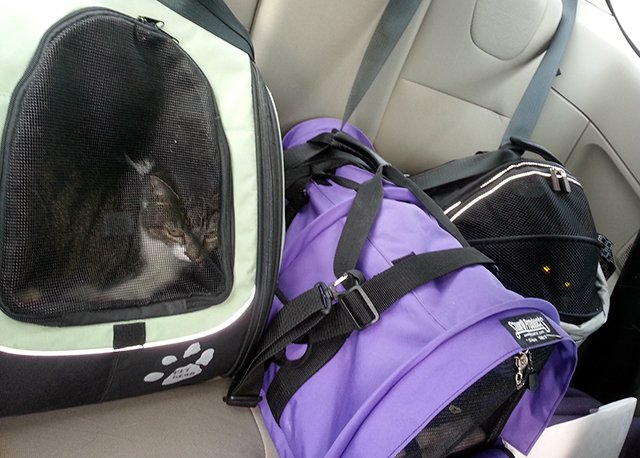 Thomas, Bella and Siouxsie in their carriers in the back of my car