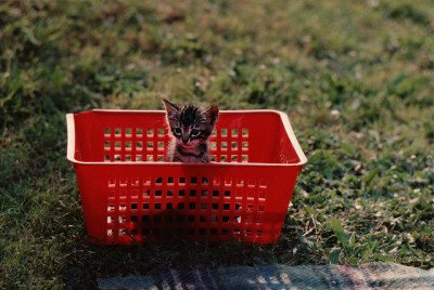 Tiny kitten alone in a basket