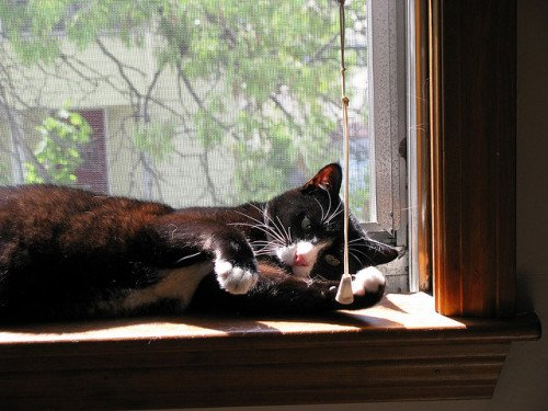 A tuxedo cat sprawled in a sunny window.