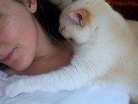 Do Cats Really Hug People?