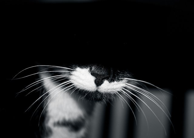Shy cat peeking out from under a safe space. Photo CC-BY Dave Young