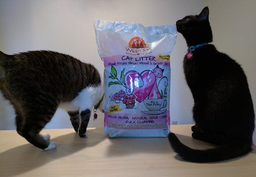 We're Having a #CatTeaPotty Here at Paws and Effect HQ!