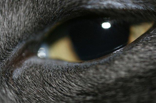 A squinting golden cat eye