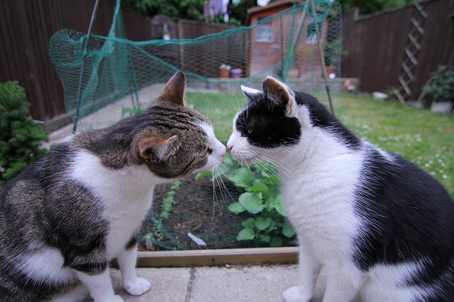 Two cats touch noses