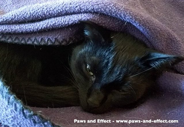 Bella hides under a blanket. Photo (c) JaneA Kelley, All Rights Reserved