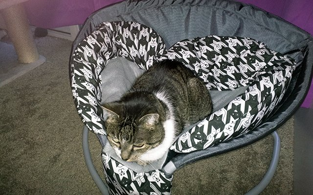 A tabby cat rests in the Perch Pet Bed.