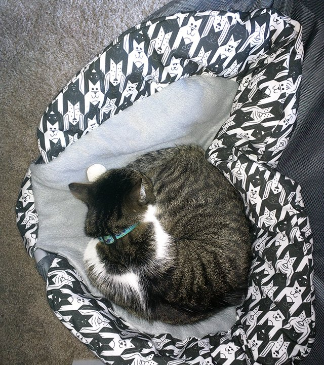 A photo of Thomas curled up in the Perch Pet Bed.