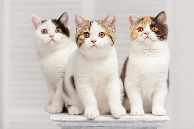 Askyourvet about a new kidney disease screening test The three cats