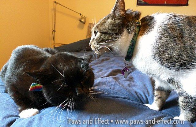 Thomas gives Tara a sniff