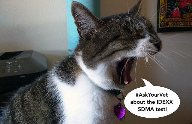 #AskYourVet about the IDEXX SDMA test.