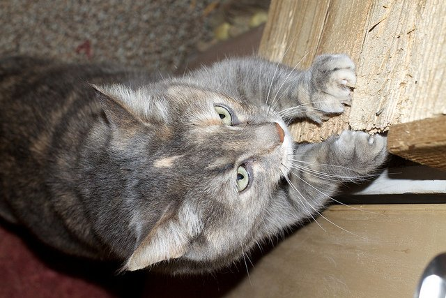Scratching is a natural behavior for cats.