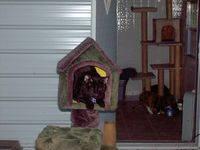 Alchemy, a cat at Blind Cat Rescue & Sanctuary