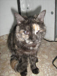 Abigail, one of the cats at Blind Cat Rescue's shelter