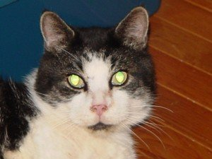 Jeffrey lives at Save Our Strays in Fairfield, Maine