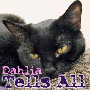 Dahlia Tells All