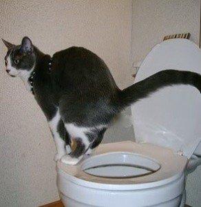 "the ""poop squat"""