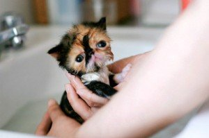 A kitten being bathed