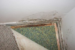 Mold in carpet and wall