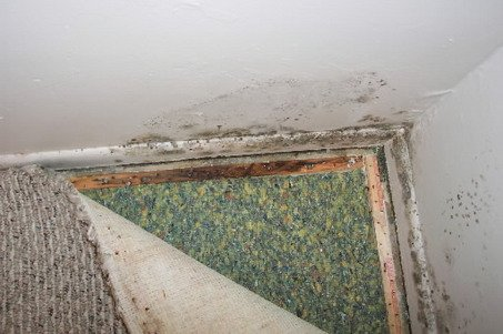 Effect Of Black Mold On Cats