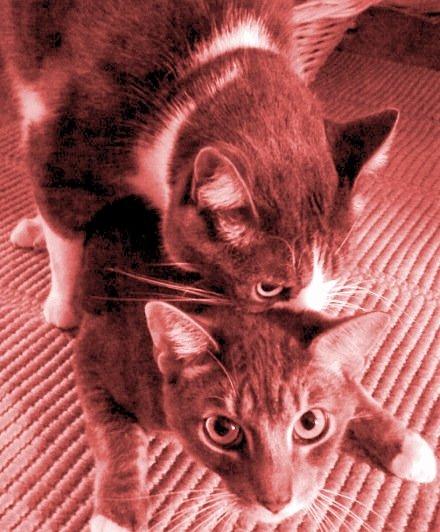 How To Get Rid Of Neighborhood Cats