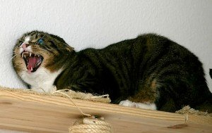 """""""Hauskatze"""" by Flickr user Smial, distributed under a CC-BY-SA 3.0 license. http://commons.wikimedia.org/wiki/File:Hauskatze_IMGP6728.jpg"""