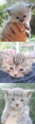 The three kittens Christina caught