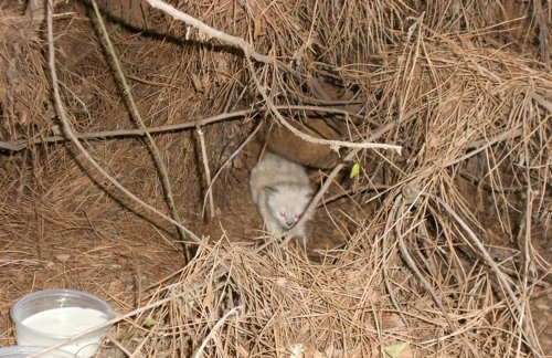 The den that the feral mama-cat made for her kittens.