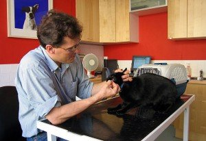 Veterinarian removing sutures from a cat's face.