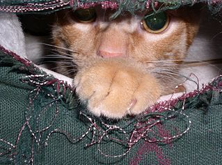 Cat peeking out from couch, (CC-BY) by Kevin Dooley