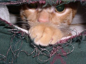 A cat peeks out from a hole ripped in couch upholstery.