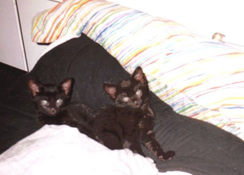 Sinéad and Siouxsie as kittens