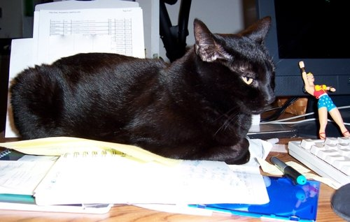 Siouxsie sits on a stack of papers on a desk
