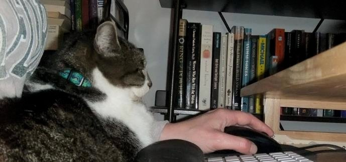 Thomas rests on JaneA's lap as she works at the computer.