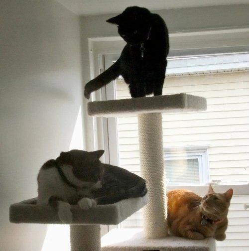 Three cats on a cat tree