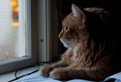 orange cat staring out a window, wanting to go outside