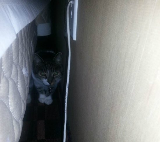 Thomas hiding behind the bed in the hotel room