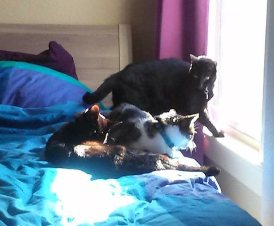Siouxsie, Thomas and Bella crowding into the best sun puddle in the house