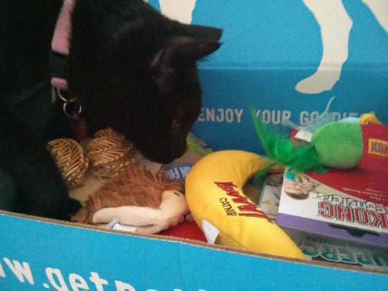Bella pokes around in the box