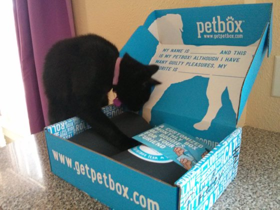 Bella checks out the PetBox