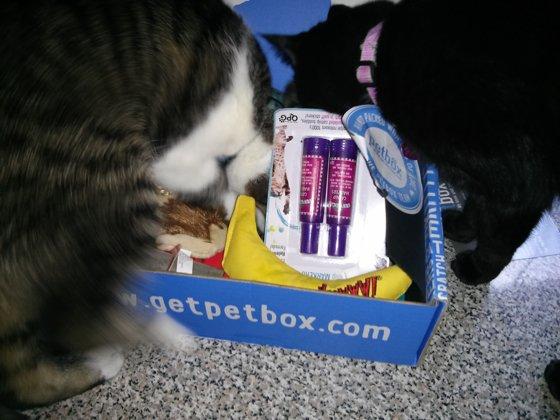 Thomas and Bella looking at the box
