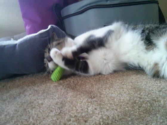 Yeowww! Catnip shot 2
