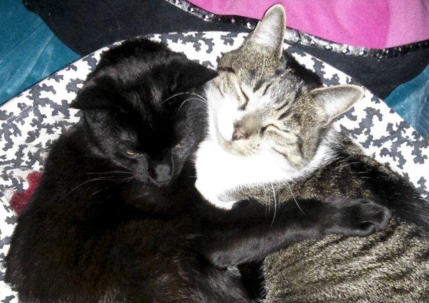 Thomas and Bella snuggling